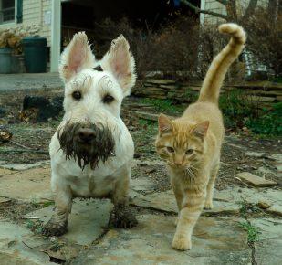 Кошка и собака пришли с прогулки