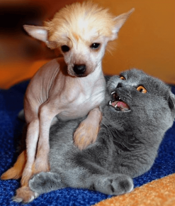 Собака села на кошку
