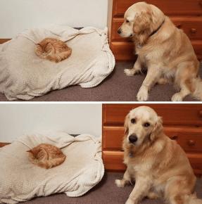 Кот занял лежанку собаки