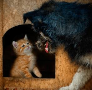 Котёнок в собачьей будке