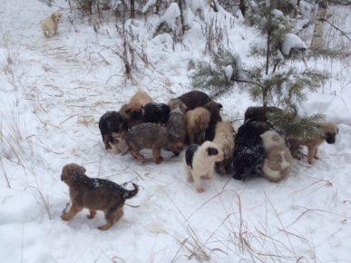 Житель Рязанской области нашел в лесу 20 щенят