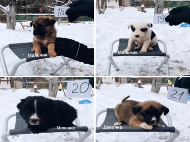 выброшенные щенки