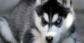 В Великом Новгороде спасли щенков у алиментщицы