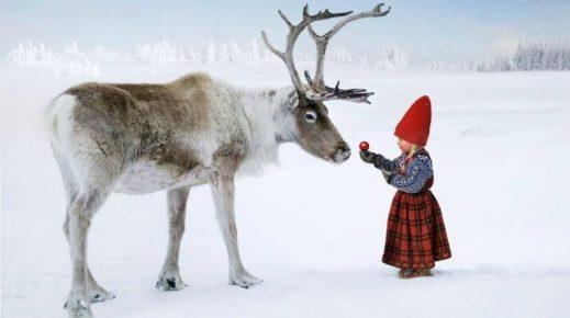 Девочка и северный олень