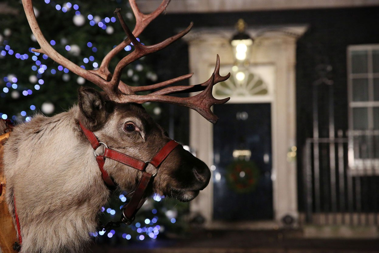 Картинки рождество олени, картинках