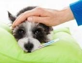 как померить температуру у собаки