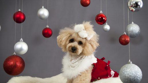 Собака среди ёлочных игрушек