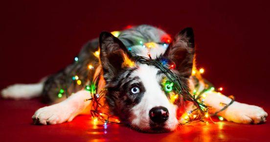 Собака в ёлочной светодиодной гирлянде