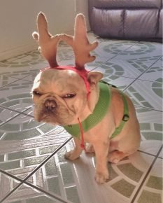 На собаку одели оленьи рожки