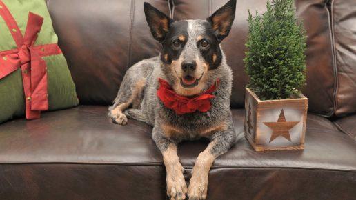 Собака на диване рядом с ёлочкой