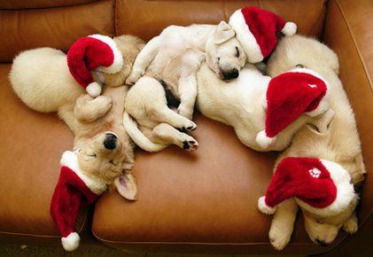 Щенки в колпаках Санта-Клауса спят на диване
