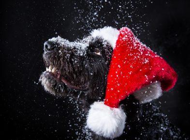 Собака в колпаке Санты