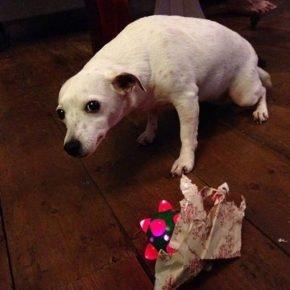 Собака открыла подарок с игрушкой