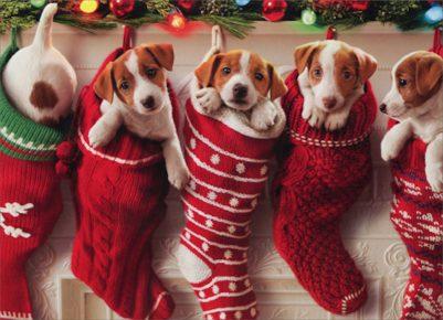 Щенки в носках для подарков