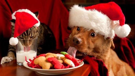 Кошка с собаой отмечают Новый Год