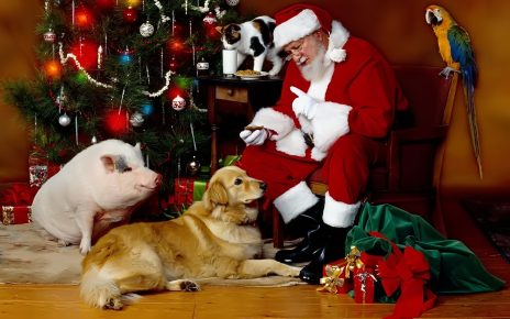 Санта-Клаус с свинкой и собакой