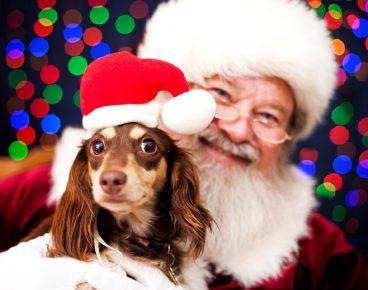 Дед мороз с собачкой!