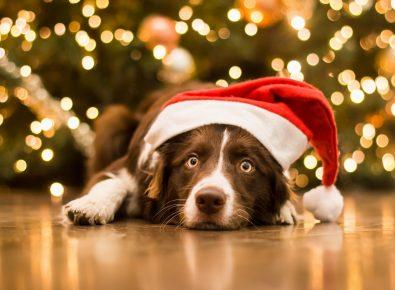 Собака лежит у новогодней ёлки