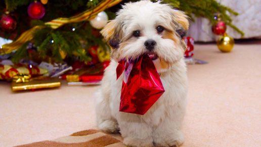 Щенок держит в зубах новогодний подарок