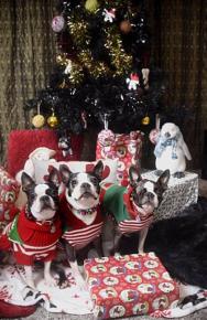 Собаки сидят перед новогодним подарком