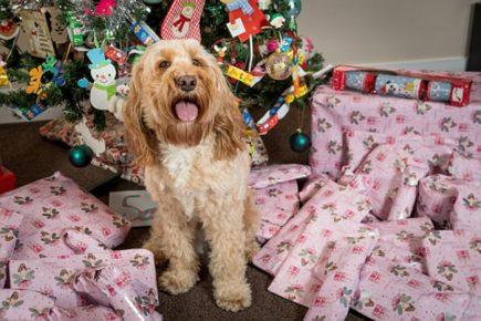 Собака которой подарили на новый год 68 подарков