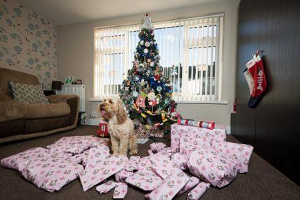 Собака у новогодней ёлки с подарками