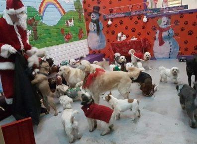 Рождество для собак в приюте