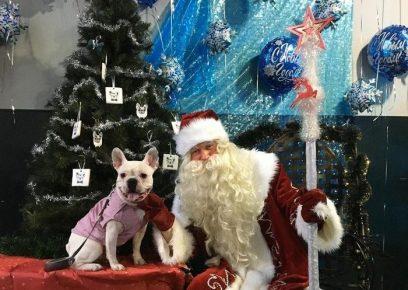 Санта-Клаус фотографируется с собакой