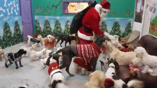 Санта пришел к собакам в приют