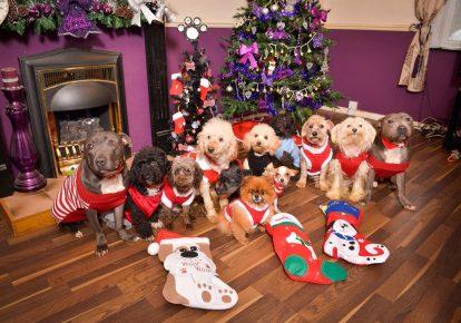 Рождественская фотосессия собак