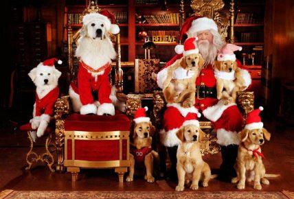 Собаки фотографируются с Сантой