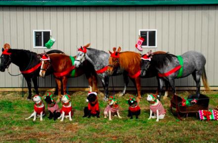 Костюмированная рождественская фотосессия собак
