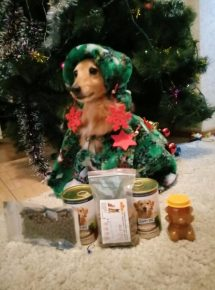 Собака в костюме новогодней ёлки