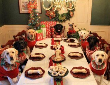 Собаки за рождественским ужином