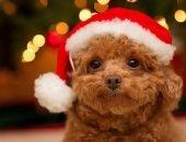 собака в новогоднем костюме