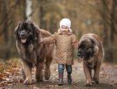 Девочка и две собаки