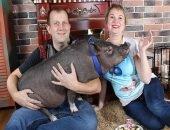 Каково это жить со свиньёй: советы семьи Фоминых