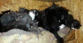 Жительница Омска приютила в съёмной квартире 50 кошек и съехала оттуда