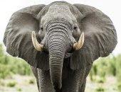 Посетитель крокодиловой фермы в Таиланде снял на камеру истощённого слона