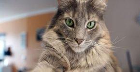 Кошка нашлась и выжила после пожара в Калифорнии
