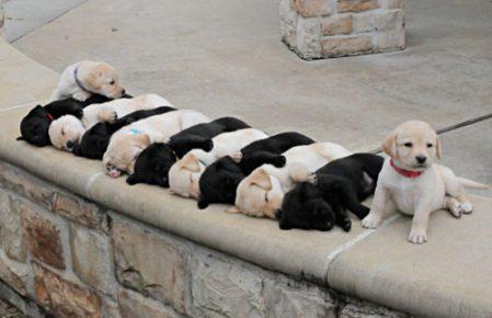 Спящие щенки лежат рядком