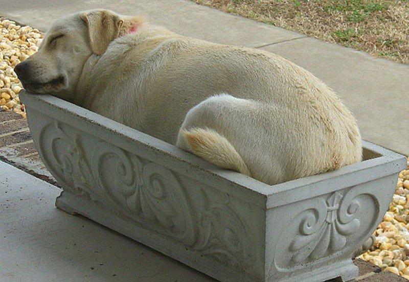 Собака спит в цветочном горшке