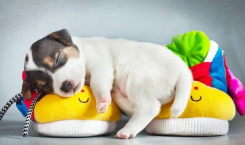 Щенок спит на подушках