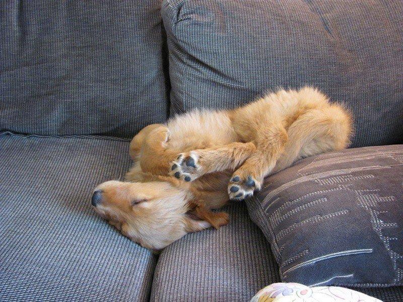 Щенок спит в странной позе