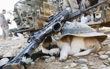 Щенок уснул на поле боя