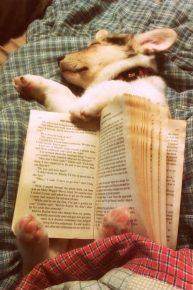 Щенок уснул с книгой