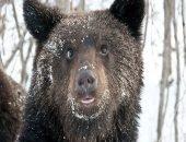 В заповеднике Брянской области медведи забыли лечь в спячку