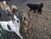 За что пострадали невинные животные