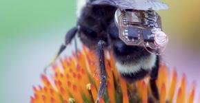 Учёные изобрели нанорюкзачок для пчёл
