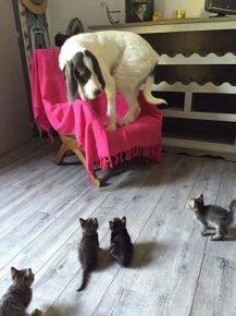 Собака впервые увидела котят